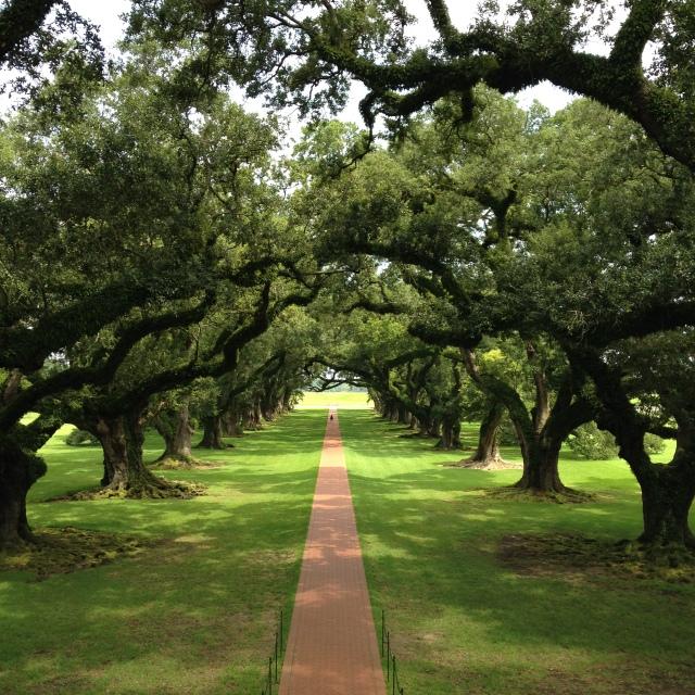 Oak Alley Plantation - Fazenda de Açúcar características no sul dos EUA!